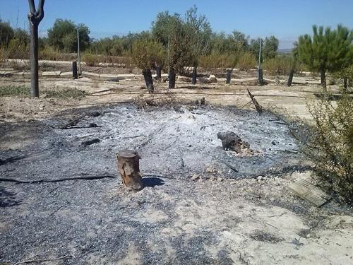 Estado en el que se encontraron las instalaciones y los árboles del paraje natural Laguna del Tejar, tras los actos vandálicos de septiembre